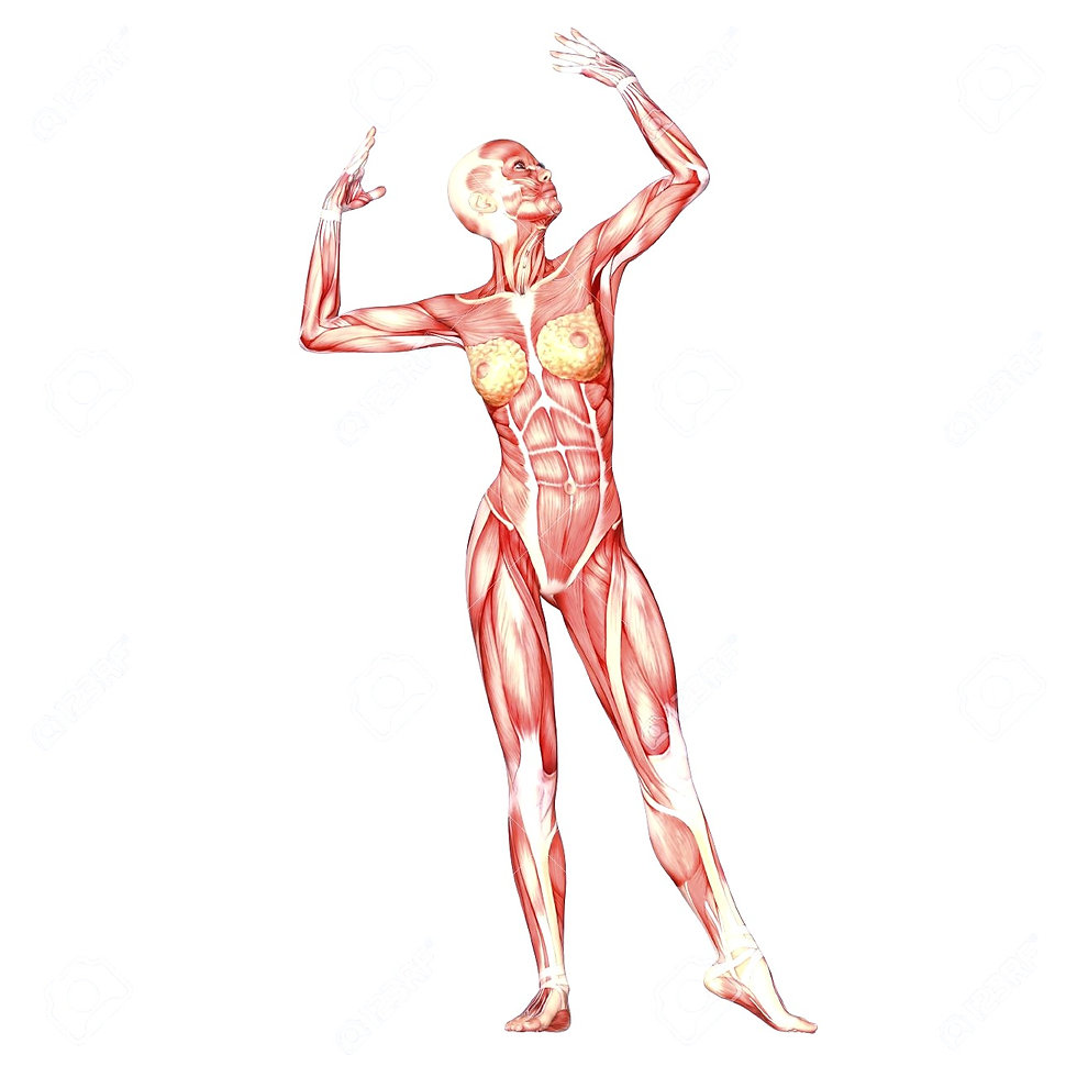 12741659-Illustration-de-l-anatomie-du-c
