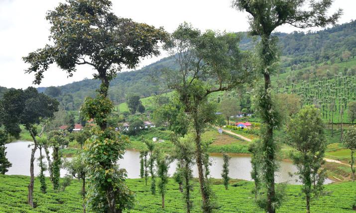 Chandramala estate drive