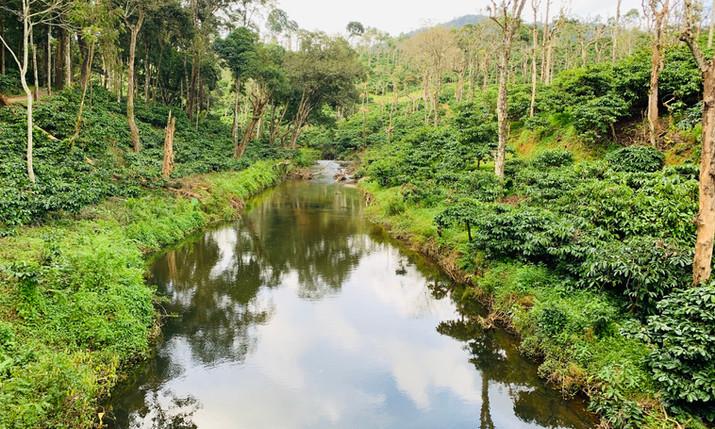 river through Pullala estate