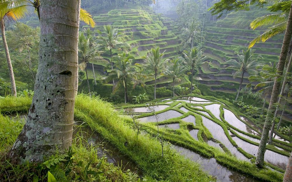 ruộng bậc thang ở Bali