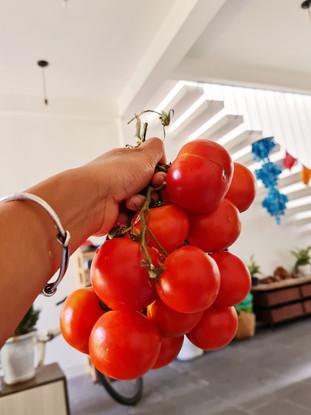Yogi eats - Cách làm sốt cà chua dự trữ