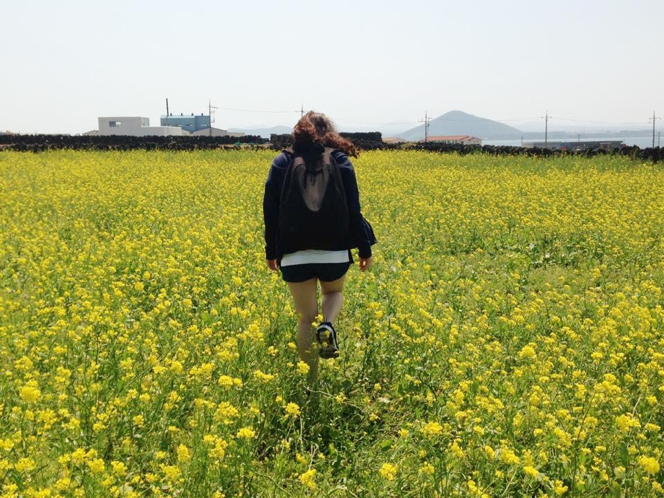Cánh đồng hoa cải trên đảo Udo - Jeju - Hàn Quốc