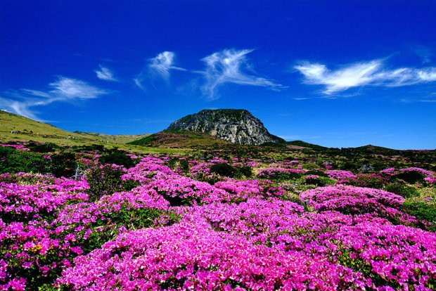 Núi Hallasan - biểu tượng của đảo Jeju Hàn Quốc