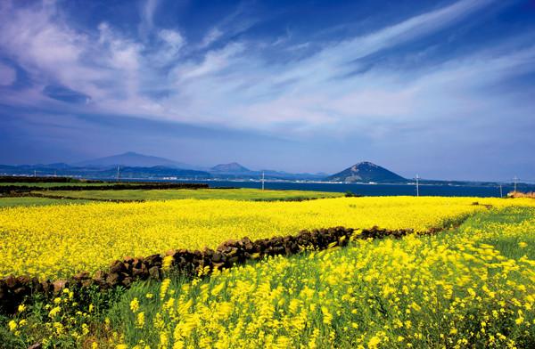 Du lịch đảo Udo lãng mạn - Jeju Hàn Quốc