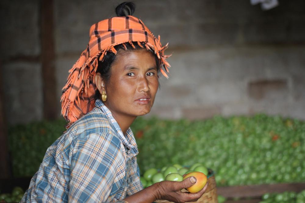 Người phụ nữ bên cạnh hàng trăm thùng cà chua vừa thu hoạch