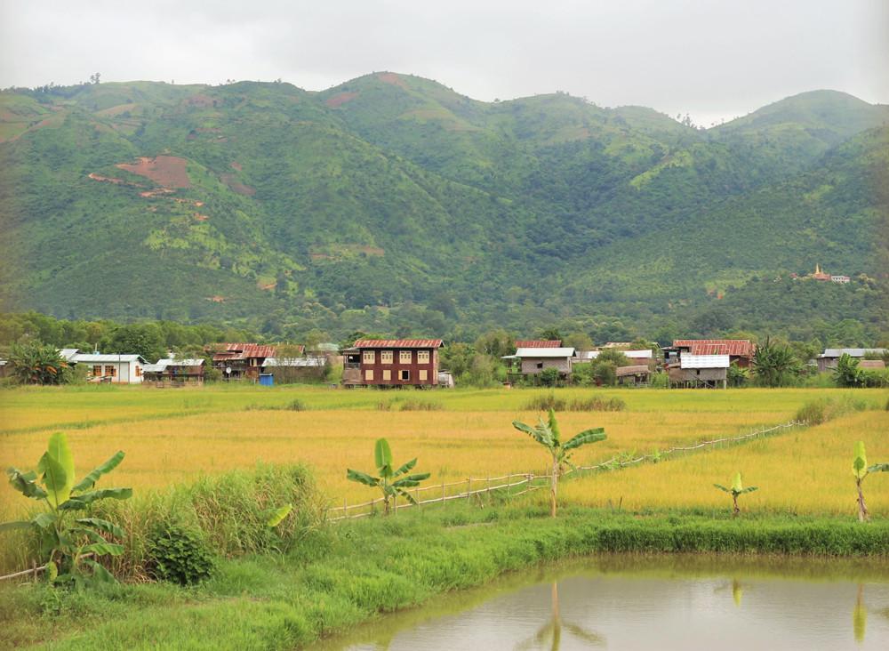 Quang cảnh từ nhà hàng nhìn ra ruộng lúa