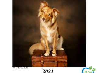 2021 Paws of Love Charity Calendar