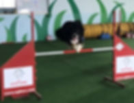 Hollywood Agility 2.jpg