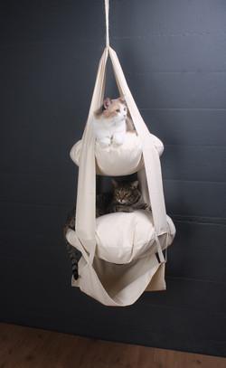 CatsTrapeze_Cats1