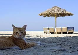 Me, You & Kitty Too! Emigrating to Antigua & Barbuda