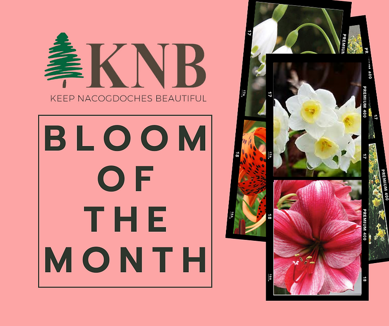Website Bloom of the Month Announcement