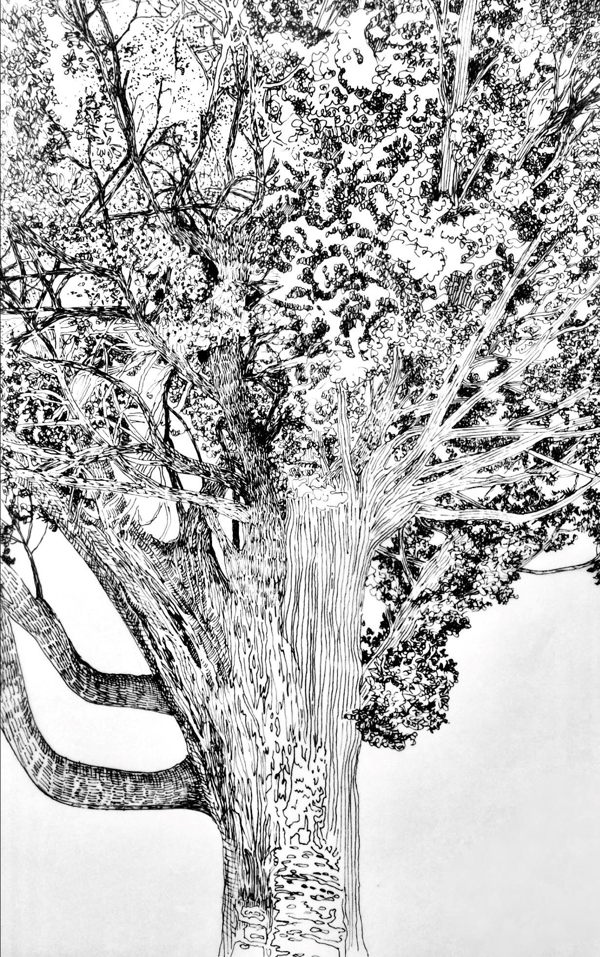 dessin arbre 2