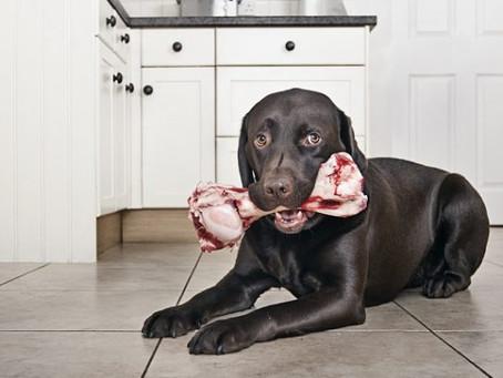 Huesos para tu perro… todo lo que tienes que saber