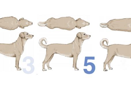 La condición corporal de tu perro, factor clave para su longevidad ¡Aprende a evaluarla en este post