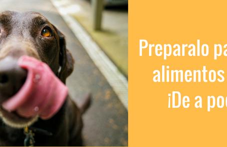 Como preparar a tu perro para comer comida casera