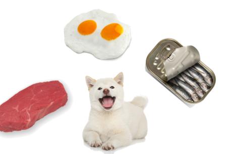 Como incorporar alimentos frescos a la comida habitual de tu compañerit@