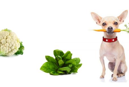 Todo lo que debes saber sobre las verduras para tu perro