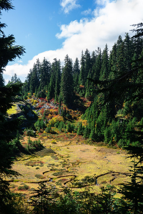 5 Colourful foliage and forest streams