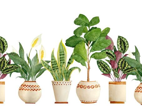 Feng Shui Indoor Plants - Top Picks!