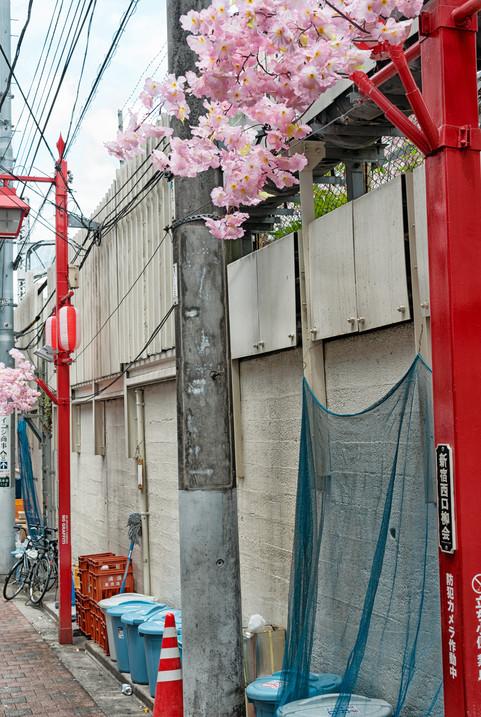 Tokio_2019_0147.jpg
