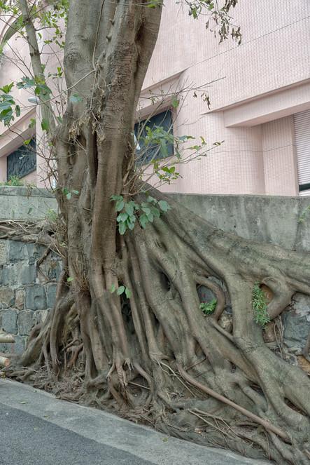 HongKong_0463.jpg