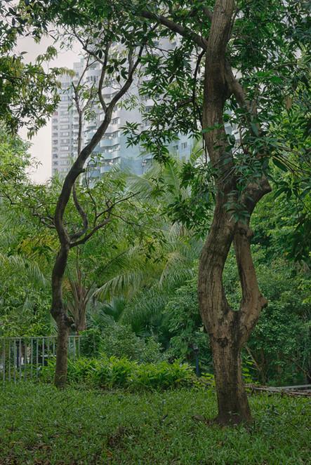 Shenzhen0188.jpg