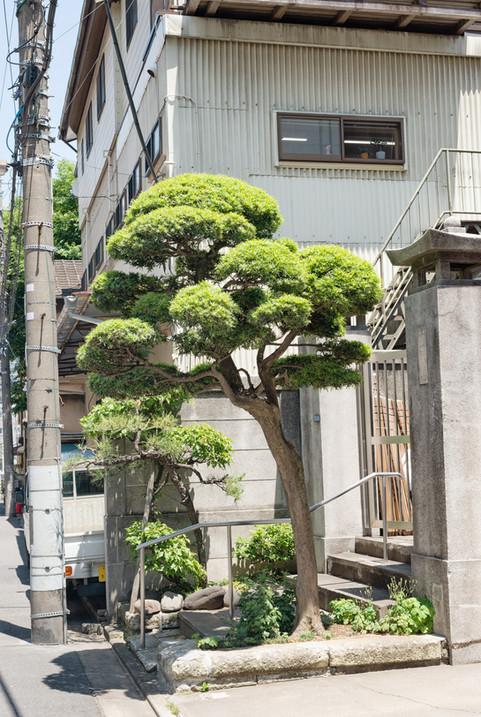 Tokio_2019_2569.jpg