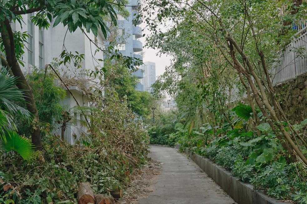 Shenzhen0178.jpg