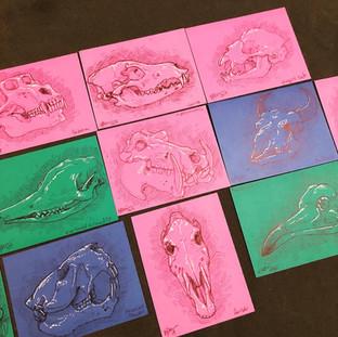 Animal Skull Sketch Postcards