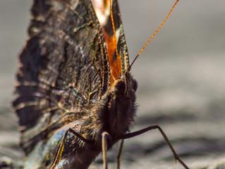 Bug Bothering