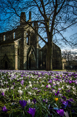 Flowers at Kirkstall Abbey