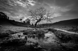 Lone Tree on the River Aire monochrome