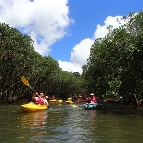 マングローブ自然をカヌーでお楽しみください