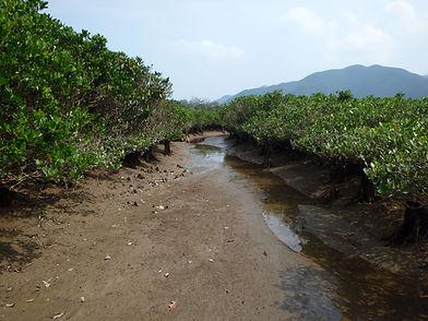 マングローブ海側水路干潮.JPG