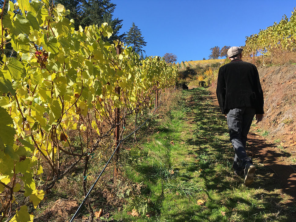 Chef Eyal Liebman walking through the vineyards of Phelps Creek