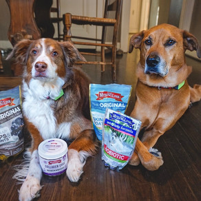 Is your dog's diet preventing them from learning?