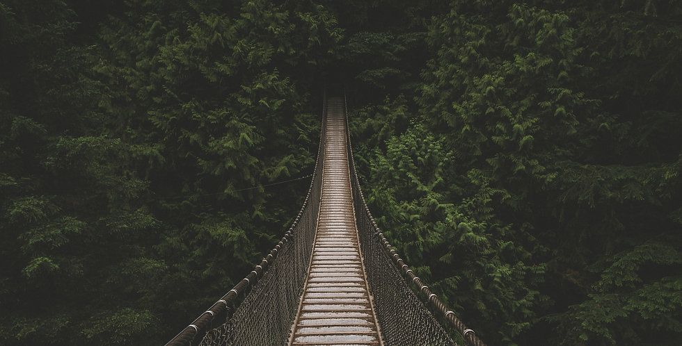 Bridge%20into%20a%20green%20thicket_edit