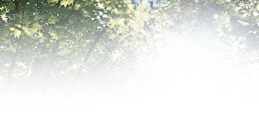 トップ_緑.jpg