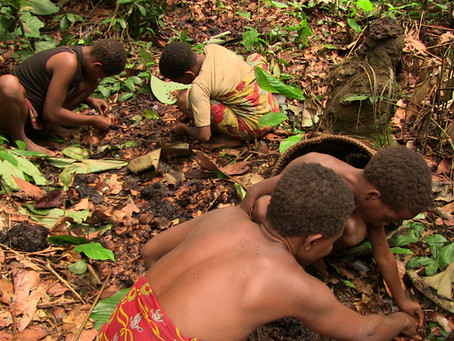 "Searching for ""mea"" wild yams in the Congo jungle"