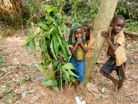 Mbendjele children of the forest