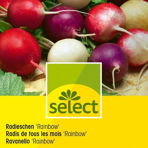 """Radieschen """"Rainbow"""""""