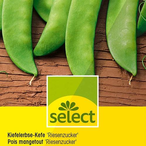 "Kiefelerbse-Kefe ""Riesenzucker"""