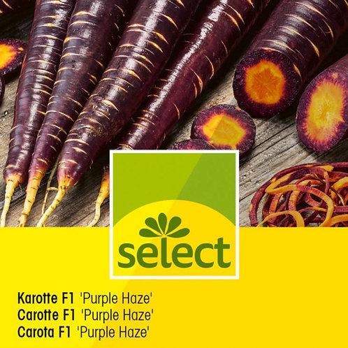 "Karotte F1 ""Purple Haze"" 1g für ca. 2.5 m2"