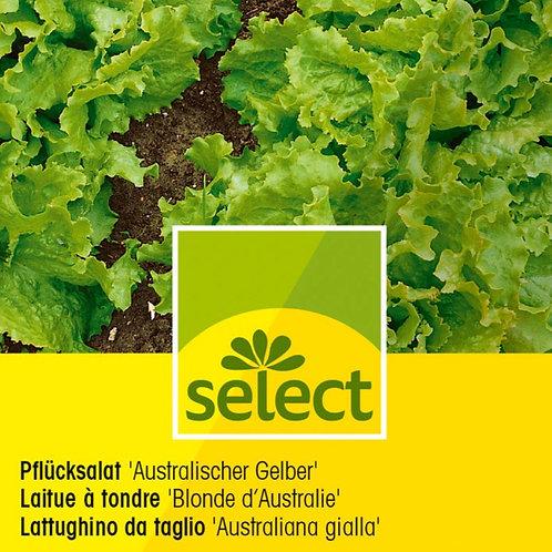 """Pflücksalat """"Australischer Gelber"""""""