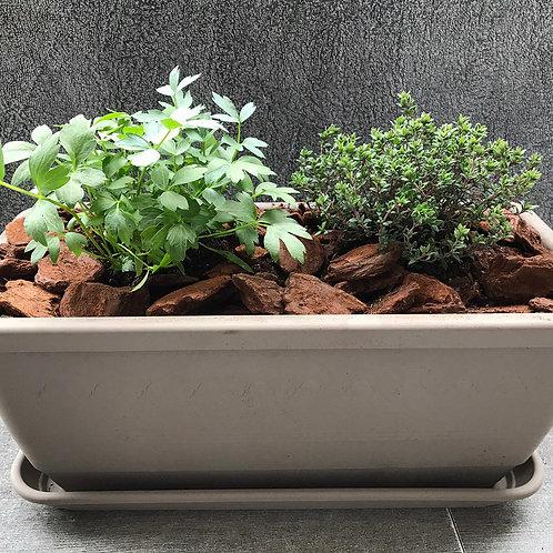 """""""Chrütercheschtli"""" 40cm taupe Gartenthymian und Liebstöckel"""