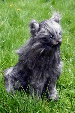 Cat Sat