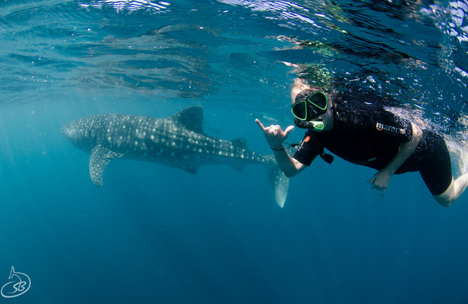 Swimming with gentle giants
