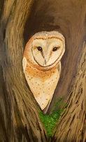 Barn Owl detail