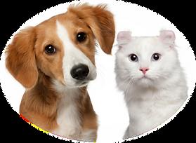BioTech 寵物抗菌除味消毒劑