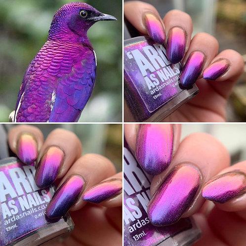 Violet Backed Starling